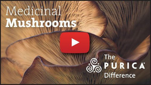PURICA Medicinal Mushrooms